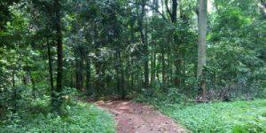 Hutan Kota Depok