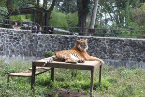 Liburan Ekonomis dan Nyaman di Kebun Binatang Bandung