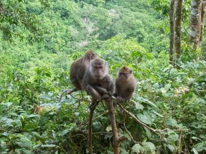 Hutan Monyet Pusuk 300x225 10 Tempat Wisata di Lombok yang Wajib Dikunjungi