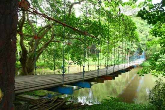 Tempat Wisata Terbaik di kota Palembang Hutan Wisata Punti Kayu