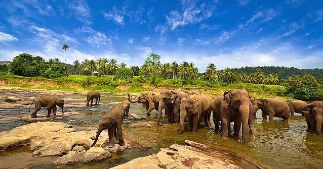 http://anekatempatwisata.com/wp-content/uploads/2014/06/Taman-Nasional-Way-Kambas.jpg