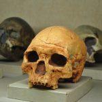 tengkorak manusia purba Museum Geologi Bandung