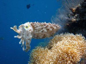 Keindahan alam bawah laut Pulau Menjangan