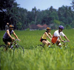 Bersepeda keliling persawahan