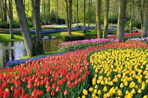 Taman Bunga Keukenhof