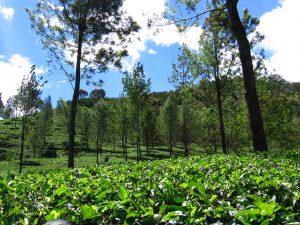 Kawasan Agrowisata Gunung Mas