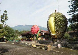 Kebun Durian Warso Farm