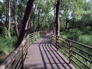 Taman Wisata Alam Angke Kapuk. tempat wisata jakarta