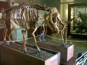 Museum Zoologi Bogor 300x225 11 Tempat Wisata di Bogor yang Wajib Dikunjungi