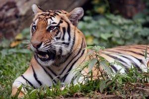 Wisata di Bogor - Taman Safari Cisarua