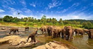 Tempat Wisata di Lampung - Taman Nasional Way Kambas