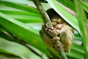 tempat wisata di Manado - Taman Wisata Tandurusa