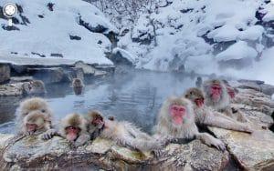 5 Tempat Wisata Terbaik Di Jepang