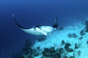 diving Labuan Bajo