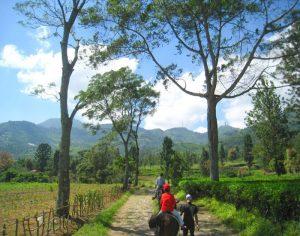 Tempat Wisata Alam di Bogor - Agro Gunung Mas