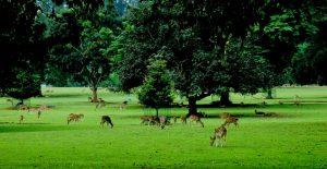 Tempat Wisata Alam di Bogor - Kebun Raya Bogor