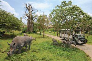 Tempat Wisata Alam di Bogor - Taman Safari Bogor