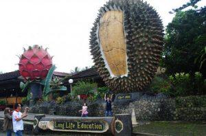 Tempat Wisata Alam di Bogor - Warso Farm