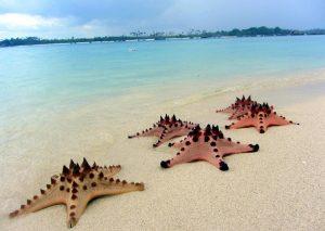 Pulau Pasir