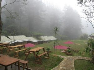 D'Jungle Private Camp - Puncak, Bogor