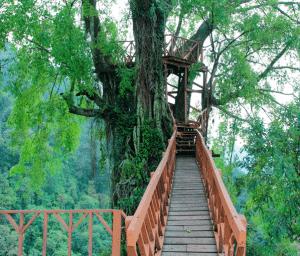 Rumah Pohon dan Jembatan Gantung Curug Ciherang Jonggol