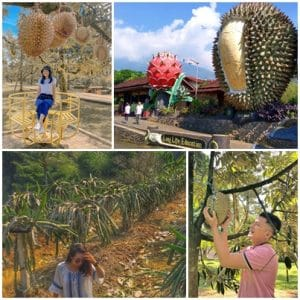 Agrowisata Warso Farm (unedo_putra, fikhairunisa, hargatiket, jejakpiknik)