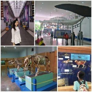 Museum Zoologi Bogor (travelparuhwaktu, jalanjalanbogor, kelloggsnyc, explorewisata)