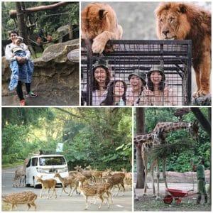 Taman Safari Bogor (kompas, tribunnews, tamansafariindonesia, adykyu)