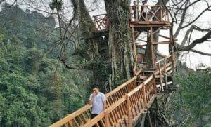 Rumah Pohon dan Jembatan Gantung Curug Ciherang (jejakpiknik)