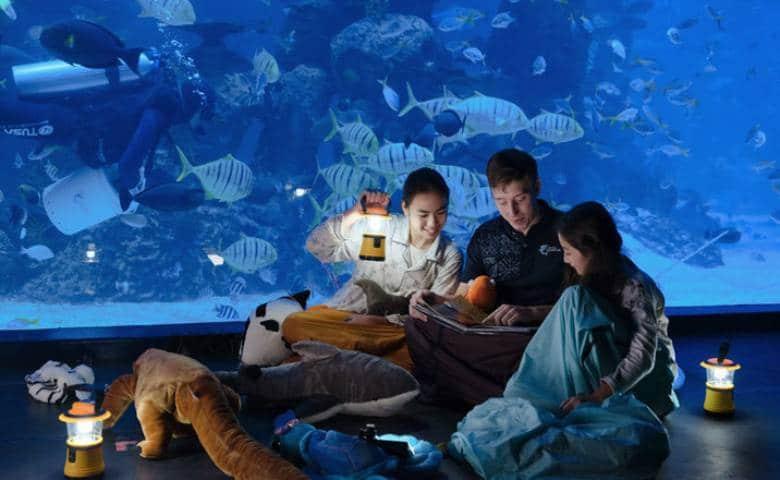 Jakarta Aquarium (loop)