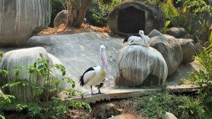 Ocean Ecopark Ancol (amadeapradhipta)