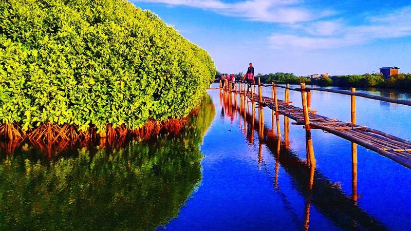 Hutan Mangrove Pasir Mendit Temon