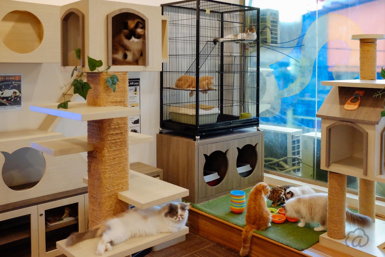 Cutie Cats & Café Restoran Murah di Jakarta
