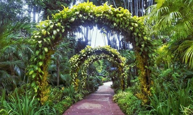 gambar singapore botanic gardens.png