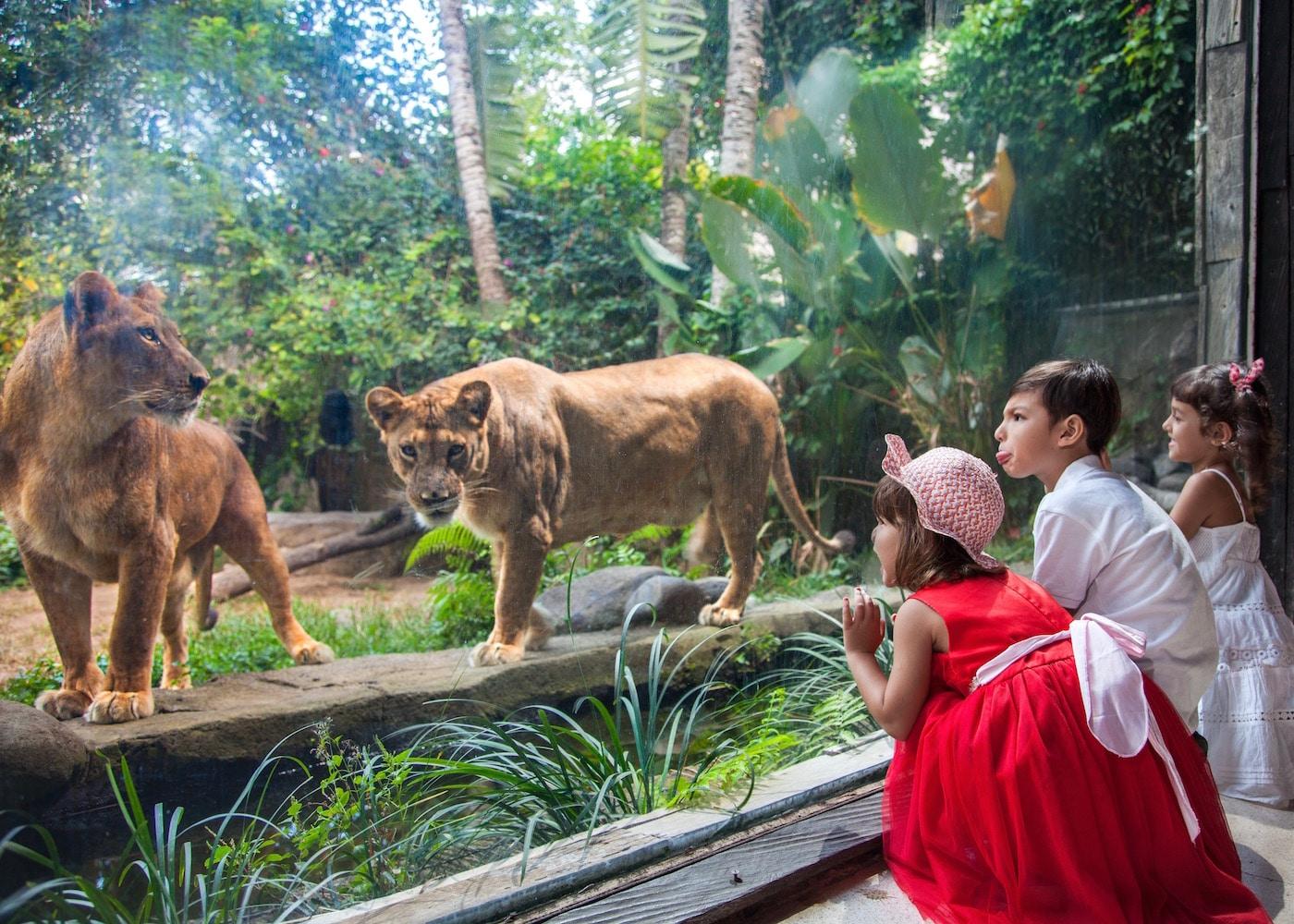 Kebun Binatang Terdekat