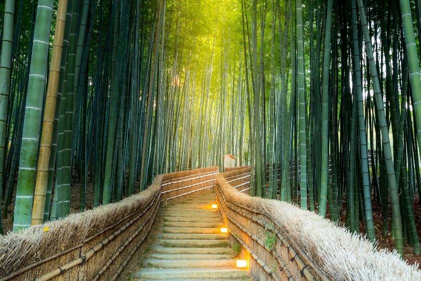 Hutan Bambu Arashiyama/ Sagano - wisata Jepang