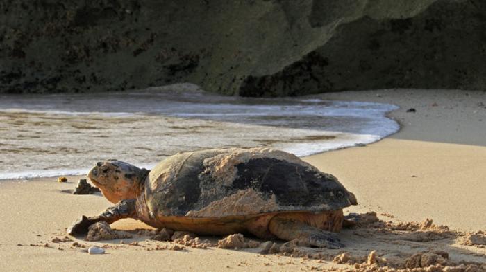 turtle park pulau serangan camping Bali