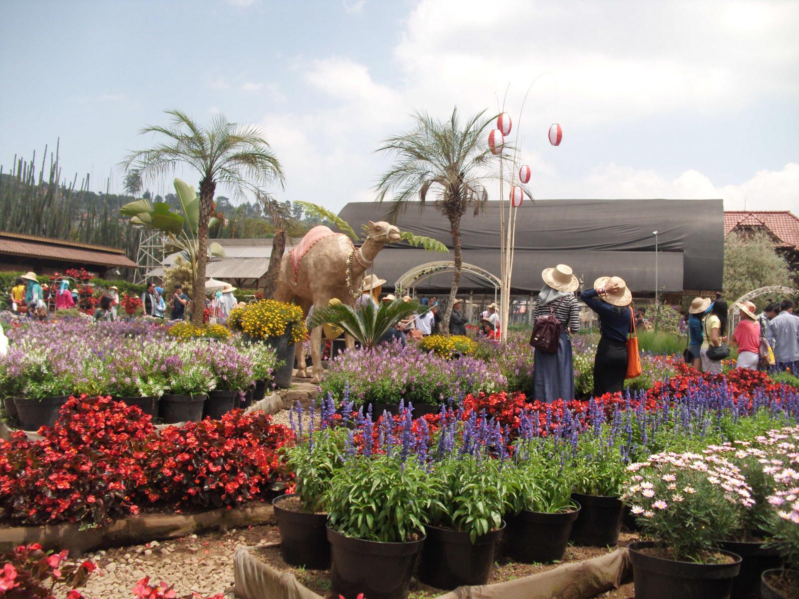 Itinerary Bandung Hari Kedua - Kebun Begonia (trivindo)