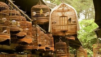 Bird Garden, Yuen Po Street (blog.luckywifi)