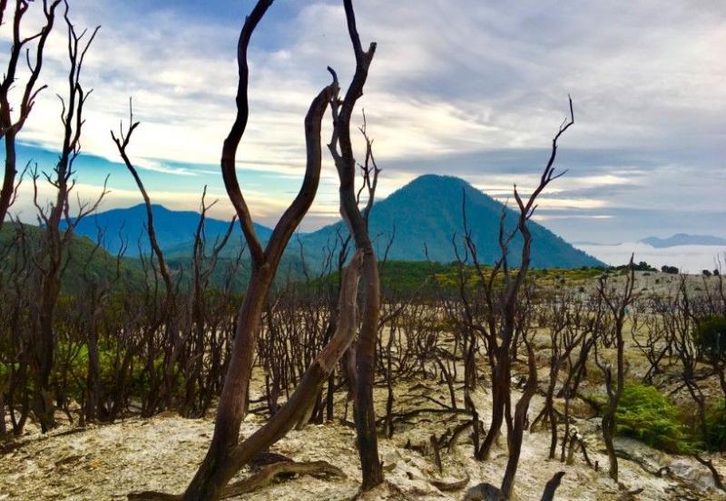 Wisata Alam Garut - hutan mati Gunung Papandayan (Kompasiana.com)