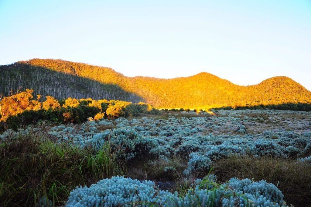 Wisata Alam Garut - padang edelweiss (LimaKaki)