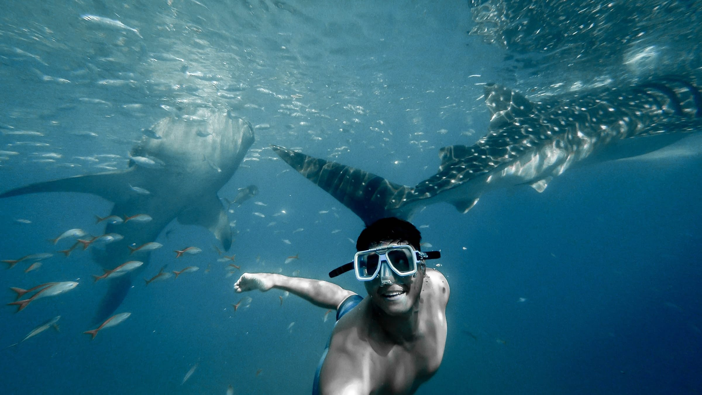 Laki-Laki Diving (mjliao)