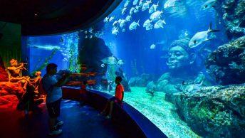 Sea Life Bangkok Ocean World (shutterstock)