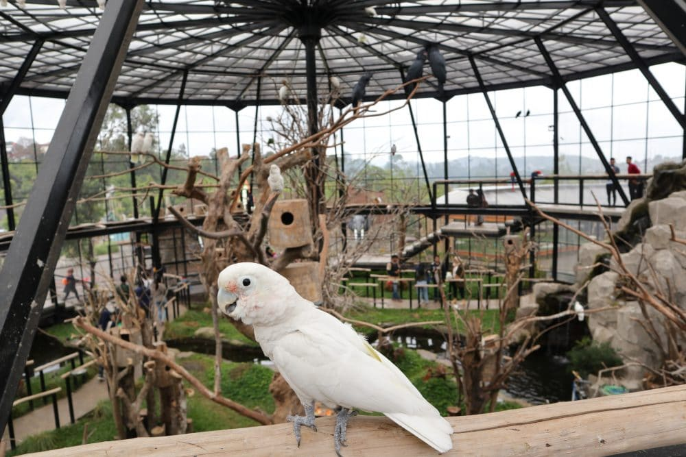 bird aviary (destinasibandung)