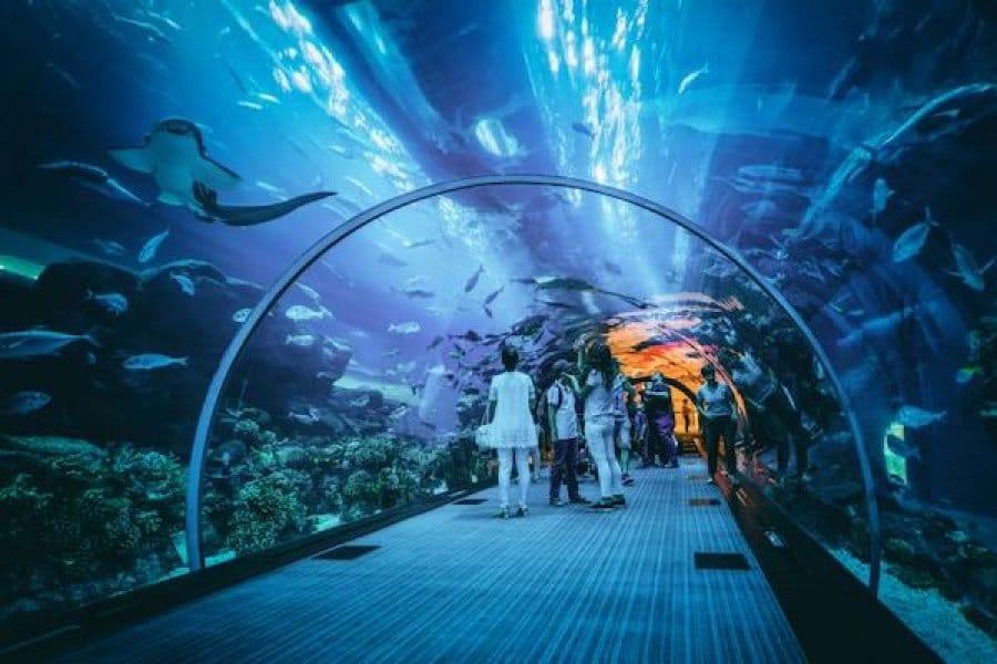 Sea World (pemburuombak)
