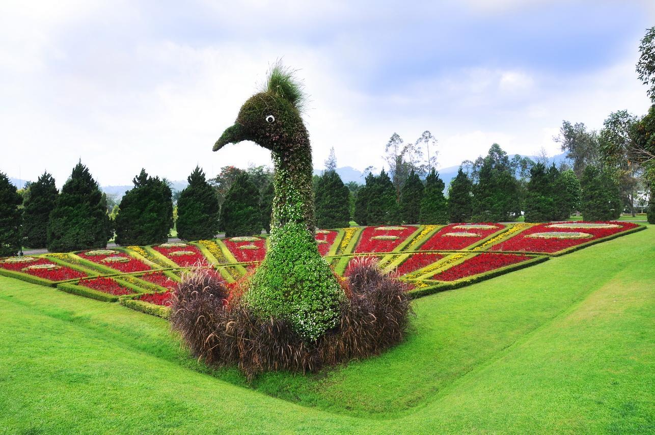 Taman Bunga Nusantara - Topiari Merak (trivindo)