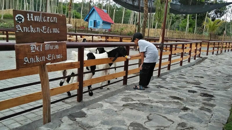 Agrowisata Bhumi Merapi (jalanjalanenak)
