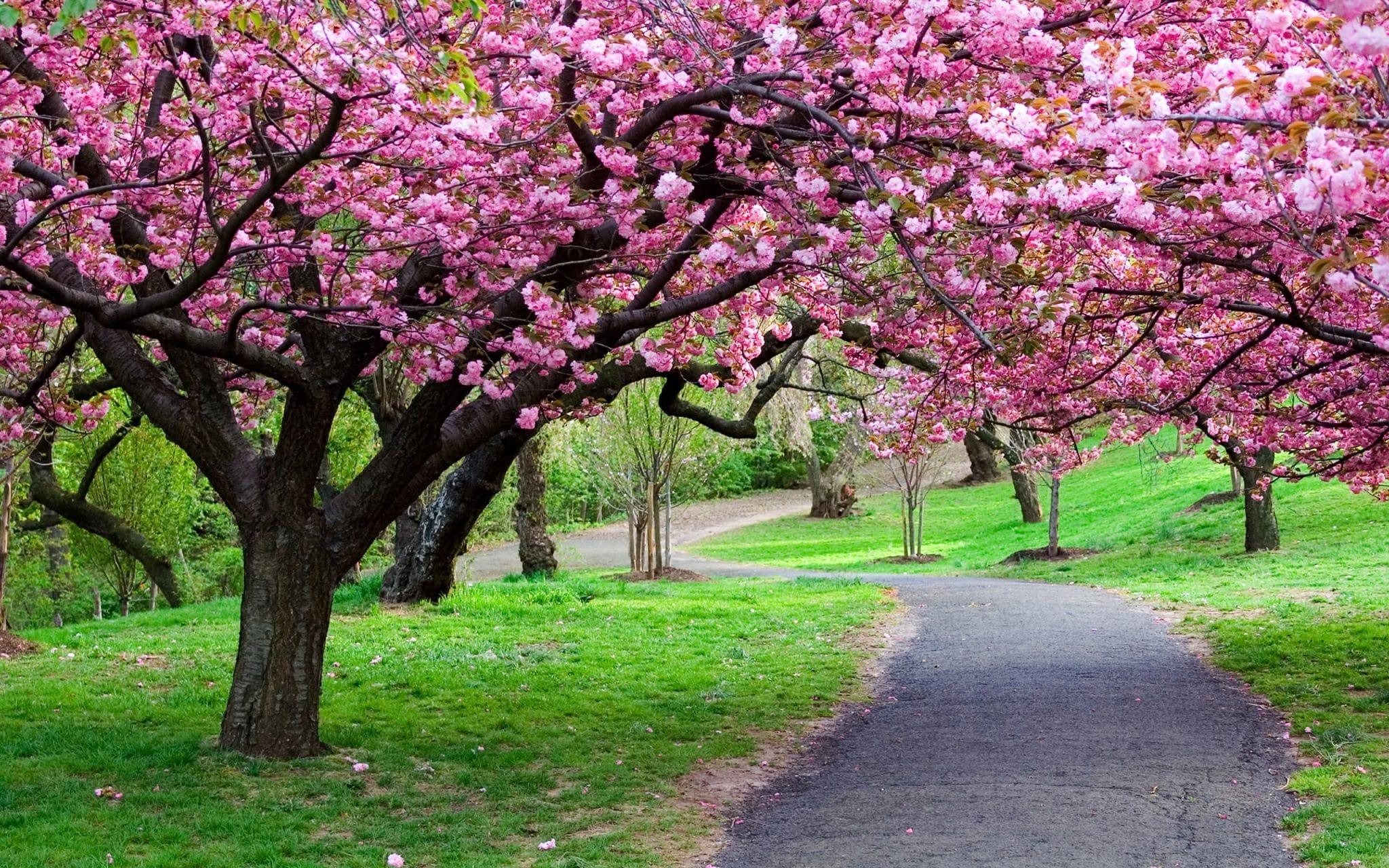 Tempat Wisata di Bogor yang Paling Murah - Taman Sakura (backpackerjakarta)
