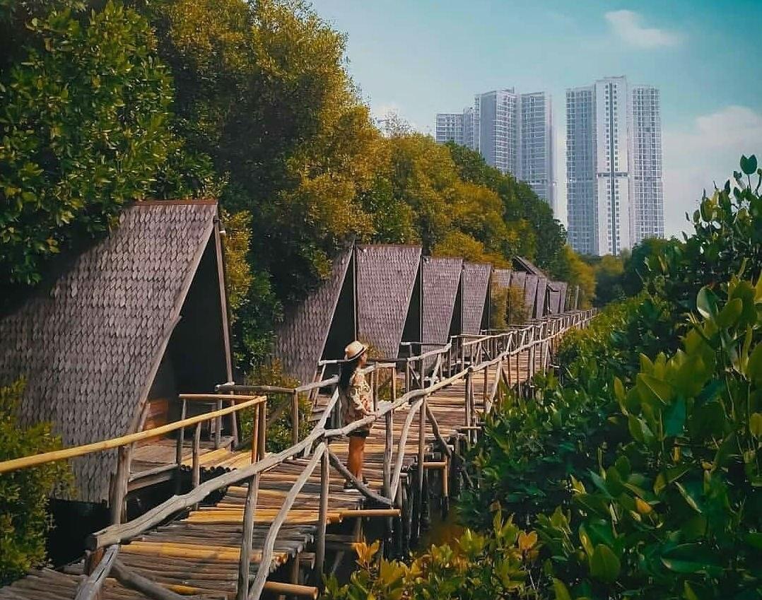 Hutan Mangrove PIK (phinemo)