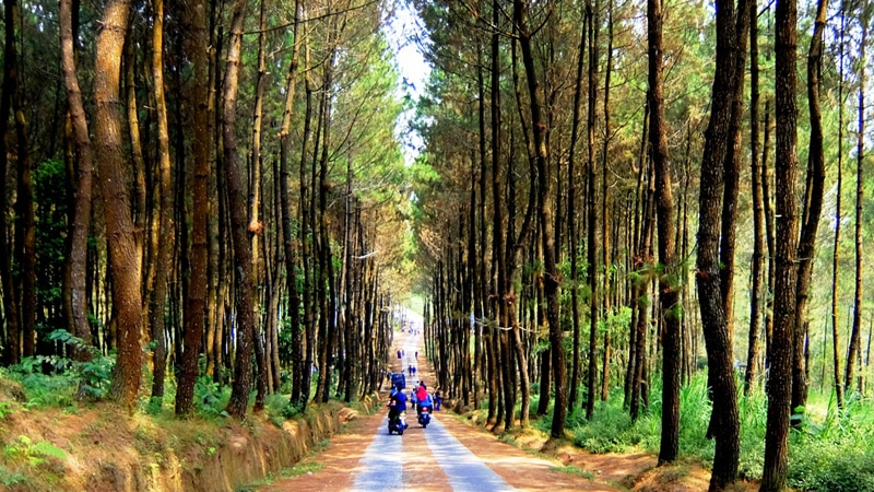 Hutan Pinus Girimulyo (limakaki)